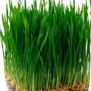 Трава для кошек Скакун