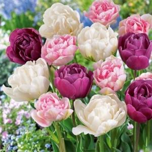 Тюльпаны махровые, смесь