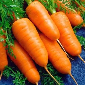 Морковь Шантенэ 2461