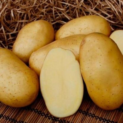 Картофель семенной Мадейра