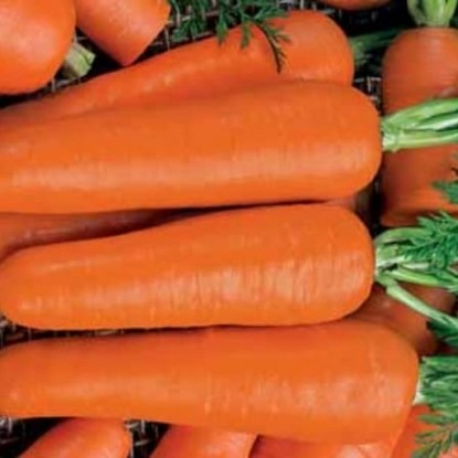 Морковь на ленте Московская зимняя А 515