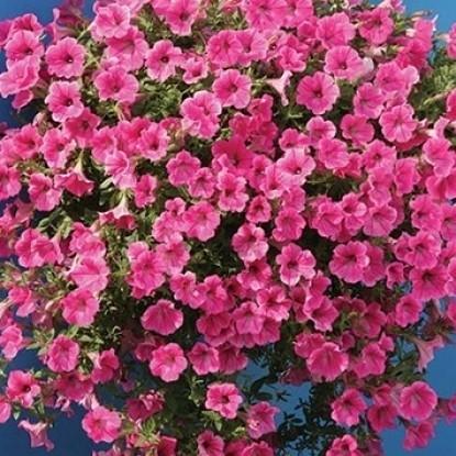 Петуния гибр Каскад розовый F1