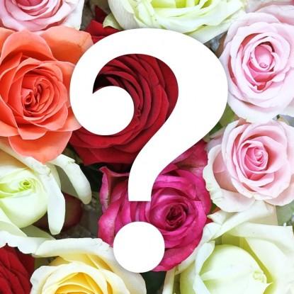 Роза Загадка Чайно-гибридная (уценка)