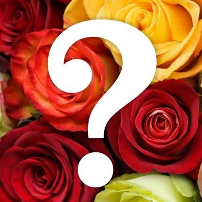 Роза Загадка Плетистая (уценка)