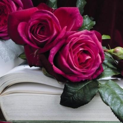 Роза Гете-Розе TANTAU