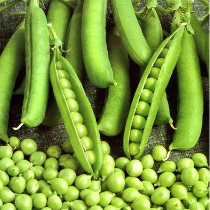 Горох Глориоза овощной