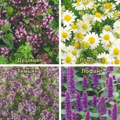 Травы для чая Ароматы лета