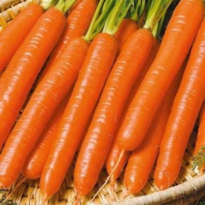 Морковь Витаминная-6 столовая