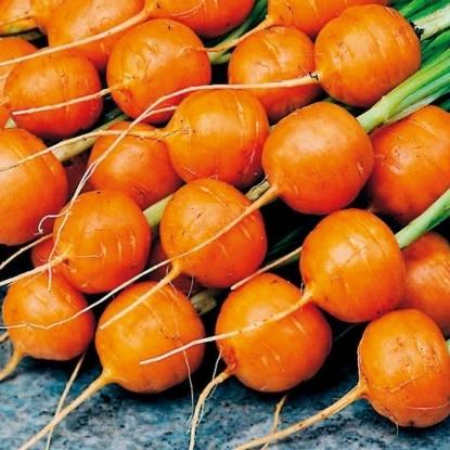Морковь Парижская каротель