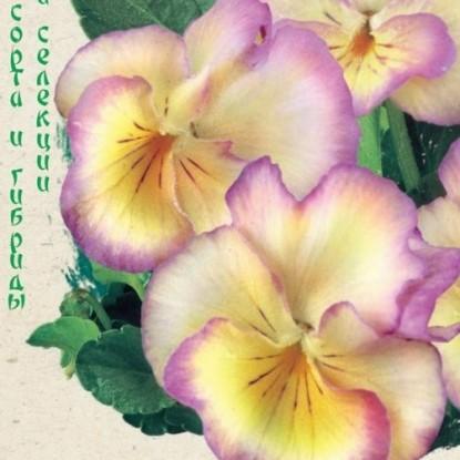 Виола (Анютины глазки) виттрока Великолепие лиловое F1 (сер. Эксклюзив)