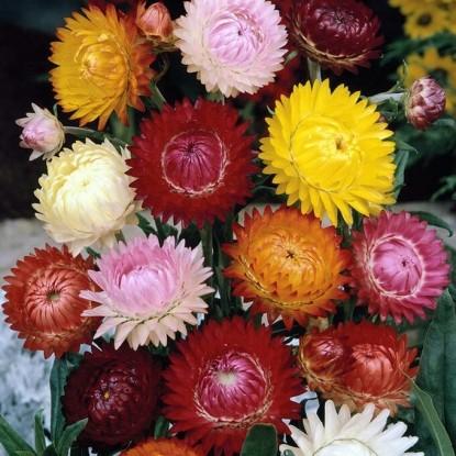 Декоративная смесь сухоцветов