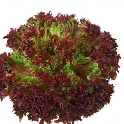 Салат Лолло Росса листовой, бордовый