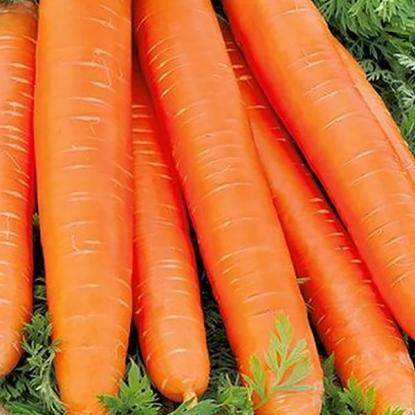 Морковь Длинная красная без сердцевины, столов