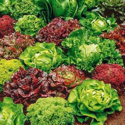 Салат Разноцветное кружево, смесь