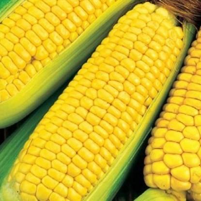 Кукуруза Награда 97