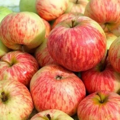 Яблоня Коробовка (Медуничка)