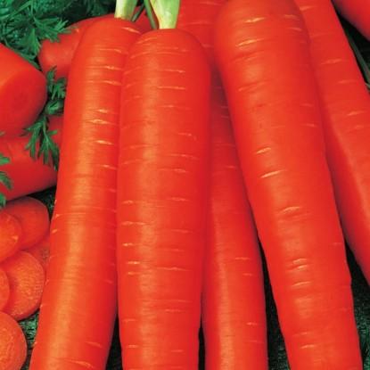 Морковь Лонге Роте (Бессердцевинная)