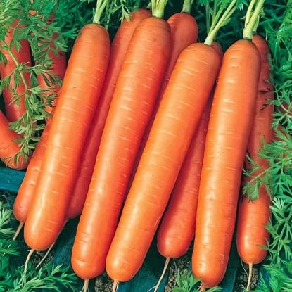 Морковь Карамельная
