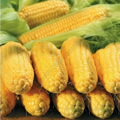 Кукуруза Спирит сахарная