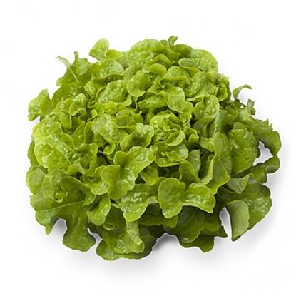 Салат Дубовый лист салатовый листовой