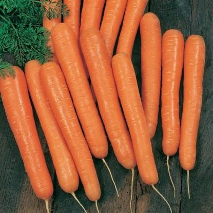 Морковь Амстердам