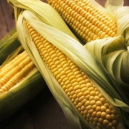 Кукуруза Золотой бантам сахарная