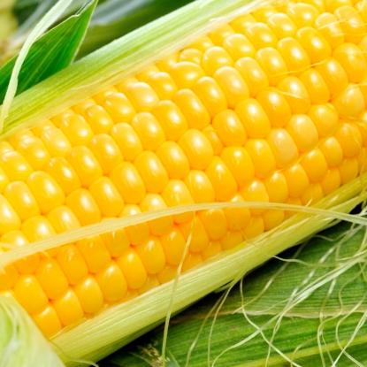 Кукуруза Соблазн сахарная