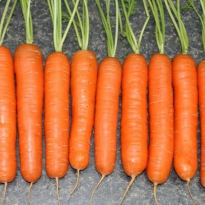 Морковь на ленте Зимний цукат 8 м