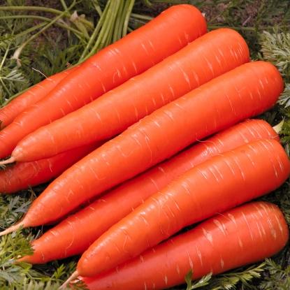 Морковь Настена (сер. Русский вкус)