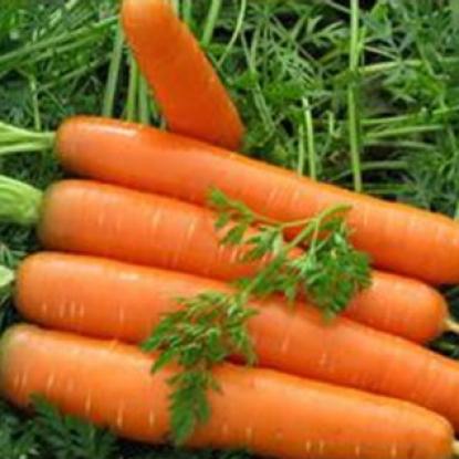 Морковь Найроби F1 столовая