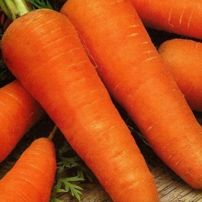 Морковь гранулир. Шантенэ 2461