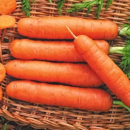 Морковь Иллада F1