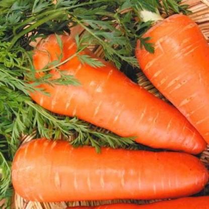 Морковь Шантенэ королевская столовая