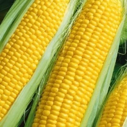 Кукуруза Сахарный початок (сер. Русский вкус)