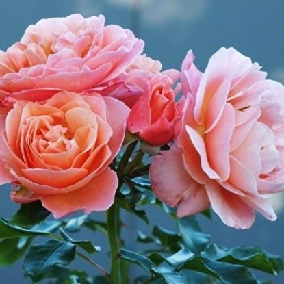 Роза Мария Кюри
