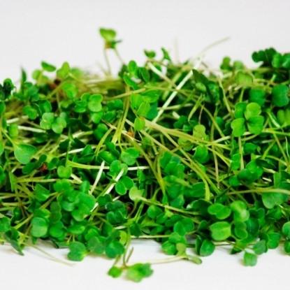 Свежая зелень (семена руколы и лоток для проращивания)