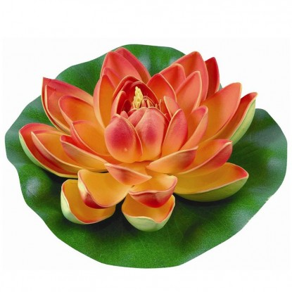 Лилия водяная, оранжевая