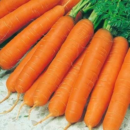 Морковь на ленте Осенний король 8 м