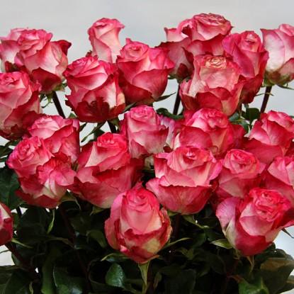 Роза Игуасу