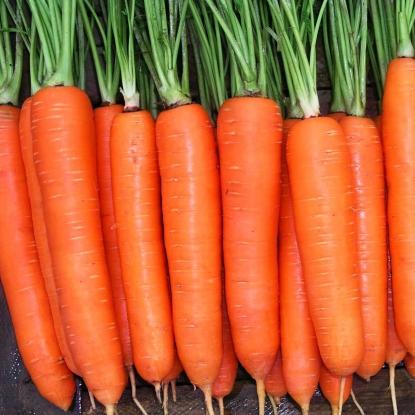 Морковь Ньюс F1