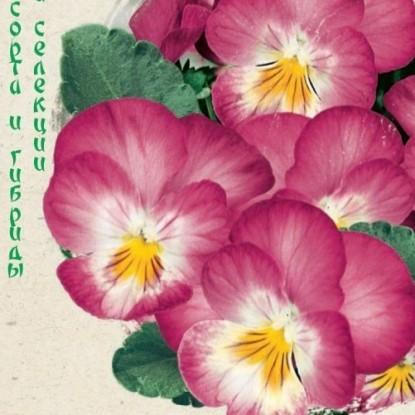 Виола (Анютины глазки) виттрока Великолепие розовое F1 (сер. Эксклюзив)