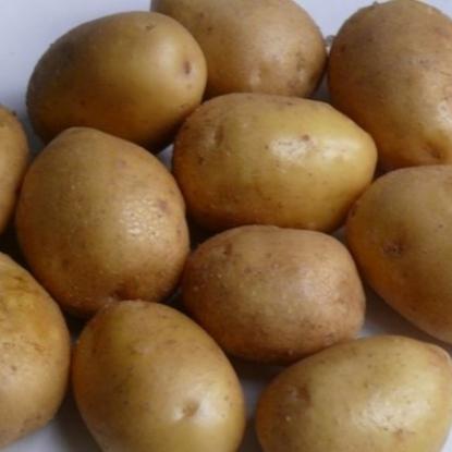 Картофель семенной Королева Анна