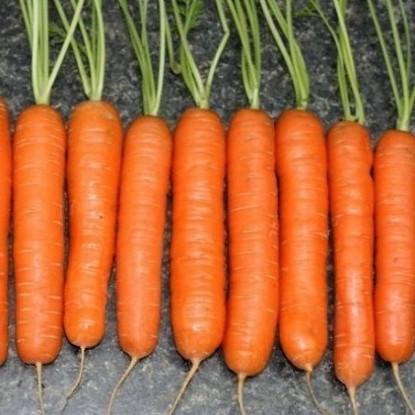 Морковь Нантская 4 (серия 1+1)