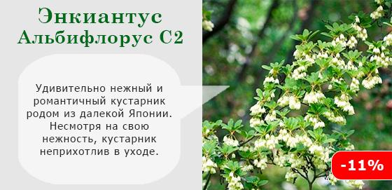 Альбифлорус С2