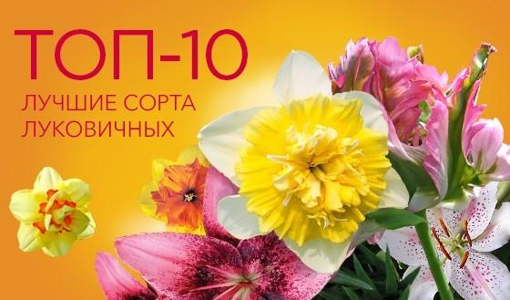 ТОП-10 луковичных