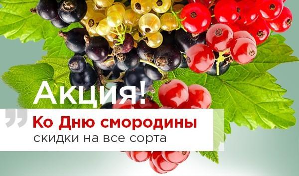 День Смородины!