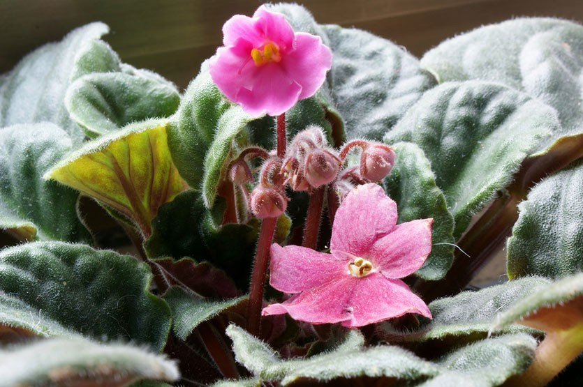 Комнатные цветы зимой