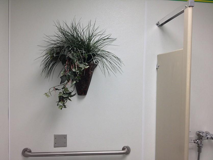 Настенное растение