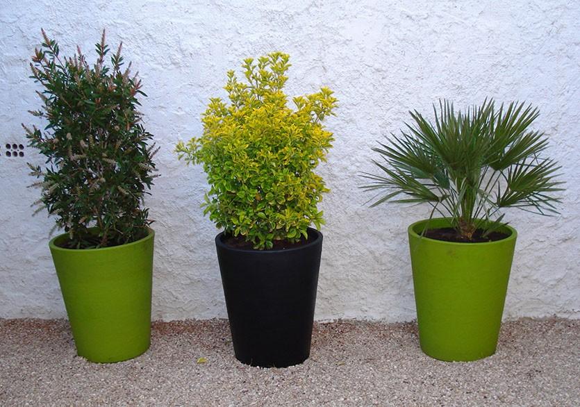 декоративно-лиственые