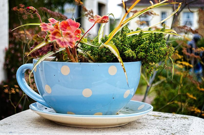 Растения в чашке